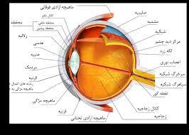 مردمک چشم