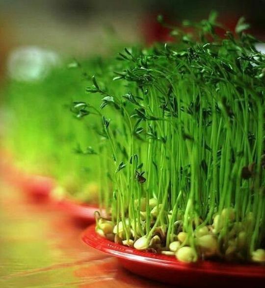سبزه عید 1400