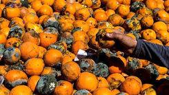 قحطی خاموش : خرید میوه های پلاسیده تا پوست مرغ !