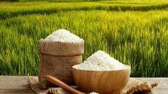 قیمت برنج افزایش یافت