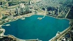 تمساح خبر ساز دریاچه چیتگر یا ماهی سوسماری؟+جزئیات