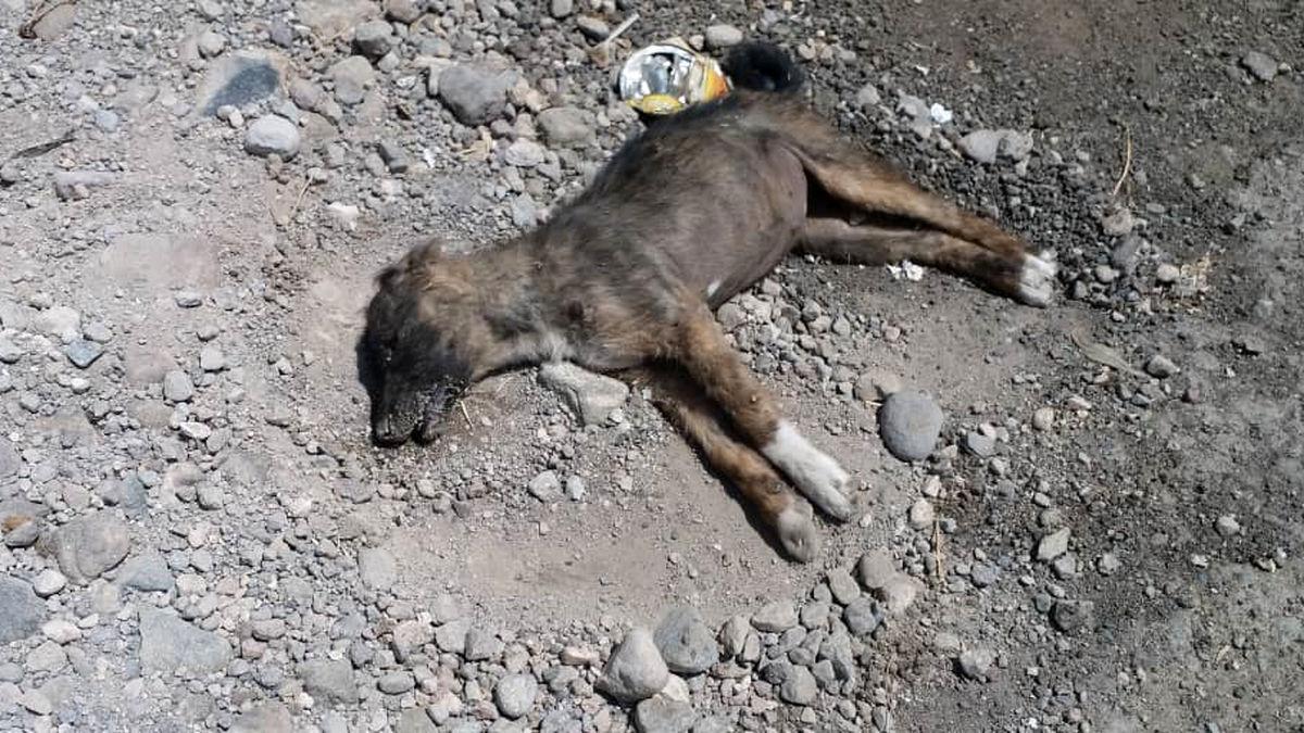 سگ کشی تکان دهنده در تبریز با سم