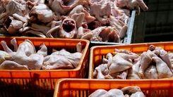 قیمت مرغ به مرز 50 هزار تومان نزدیک است / قیمت مرغ بالا رفت
