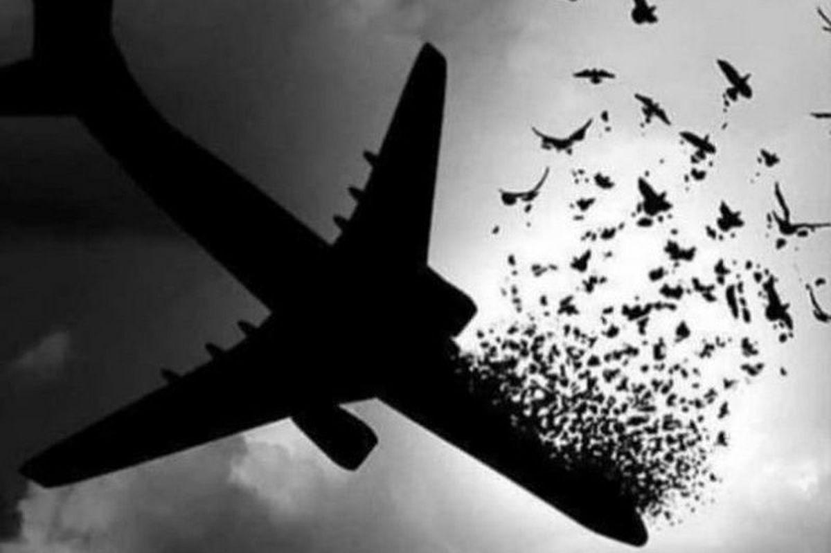 خبر های تازه از پرونده سقوط هواپیمای اوکراینی